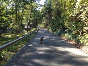 Trough Creek Drive
